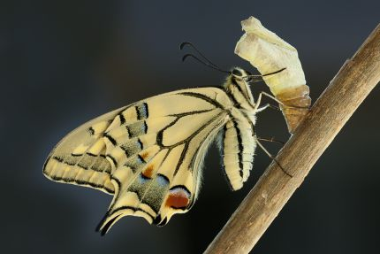 http://www.naturparkfotos.de/system/galleryimages/78745/normal/Metamorphose.jpg?1280768460